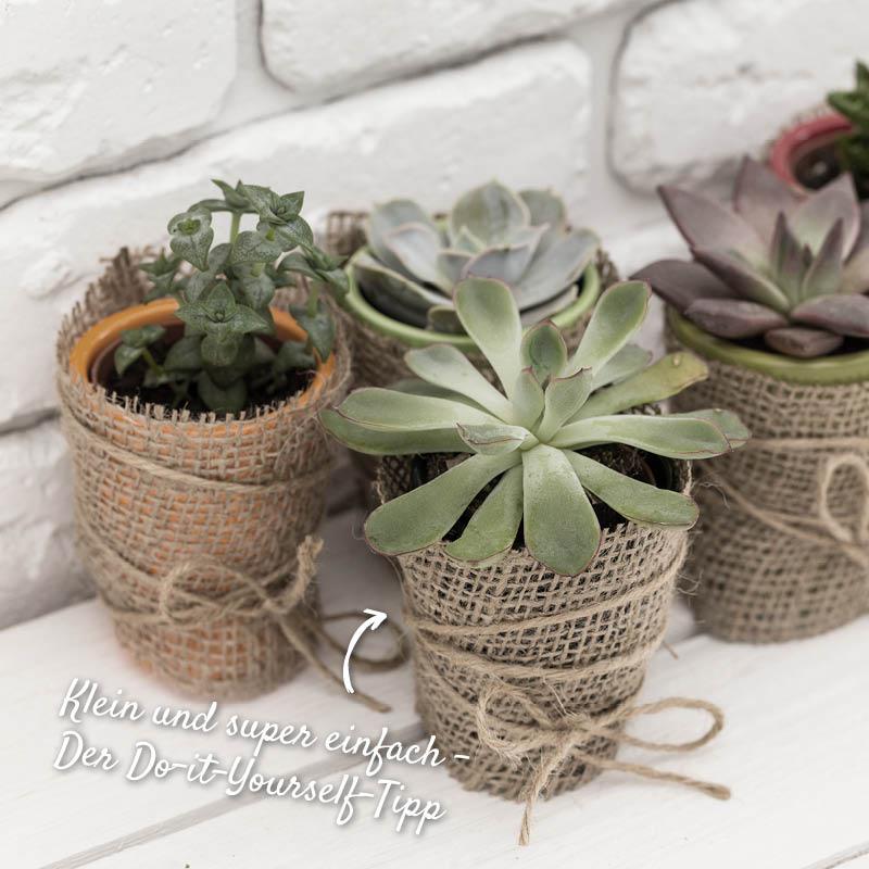 Dekorative Deko mit Pflanzen – HolzLand Verbeek