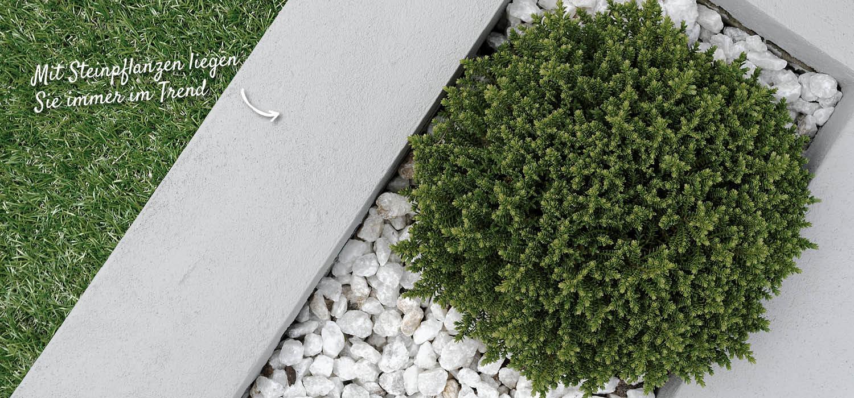 steinpflanze-trend-holzland-verbeek