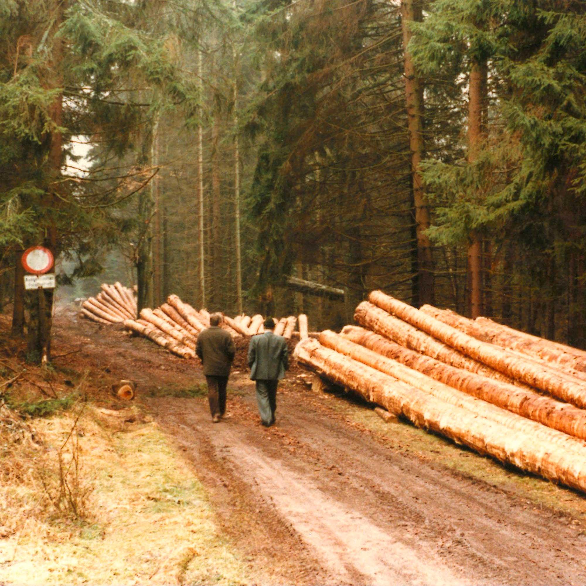Frisch gefällte und von Rinde und Ästen befreite Baumstämme am Rand eines Waldwegs
