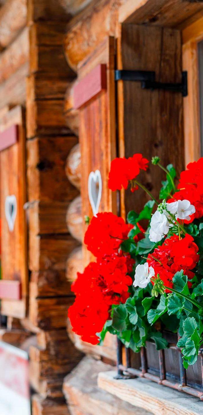 sauna-bayern-cottage-dunkel-holzland-verbeek